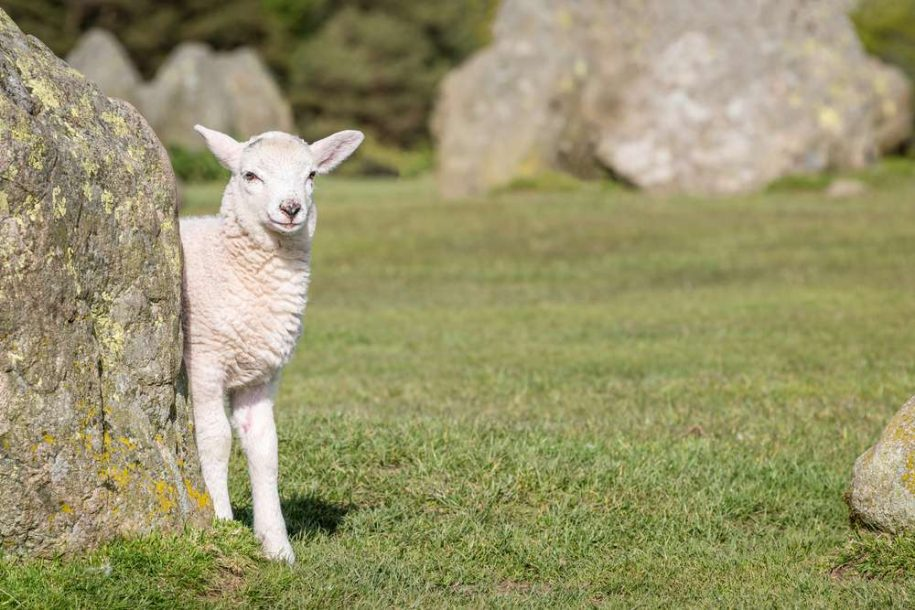 Things to do in May in the Lake District